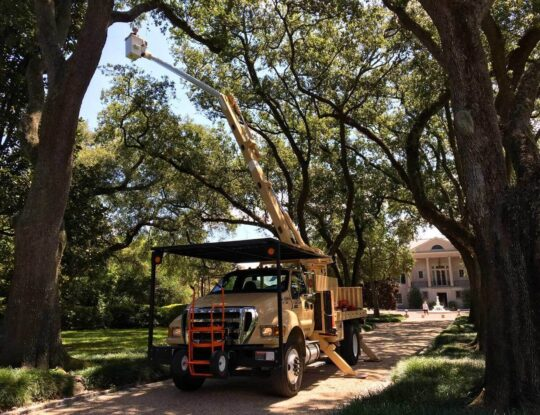 Commercial Tree Service-Lake Worth Tree Trimming and Tree Removal Services-We Offer Tree Trimming Services, Tree Removal, Tree Pruning, Tree Cutting, Residential and Commercial Tree Trimming Services, Storm Damage, Emergency Tree Removal, Land Clearing, Tree Companies, Tree Care Service, Stump Grinding, and we're the Best Tree Trimming Company Near You Guaranteed!