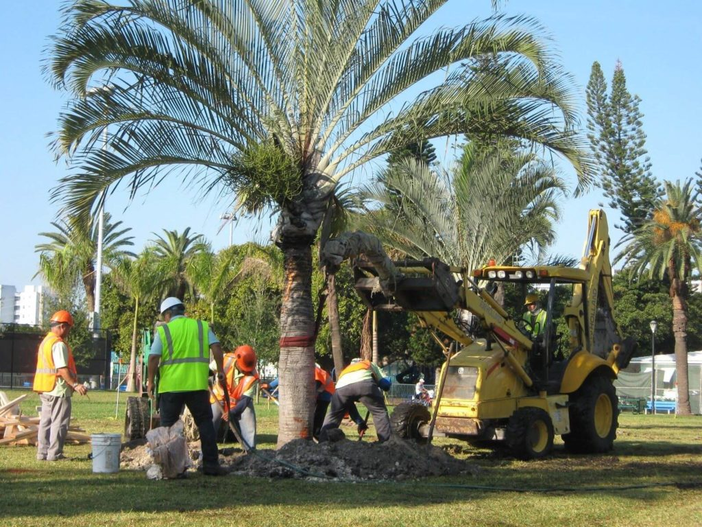 Palm Tree Trimming & Palm Tree Removal-Lake Worth Tree Trimming and Tree Removal Services-We Offer Tree Trimming Services, Tree Removal, Tree Pruning, Tree Cutting, Residential and Commercial Tree Trimming Services, Storm Damage, Emergency Tree Removal, Land Clearing, Tree Companies, Tree Care Service, Stump Grinding, and we're the Best Tree Trimming Company Near You Guaranteed!