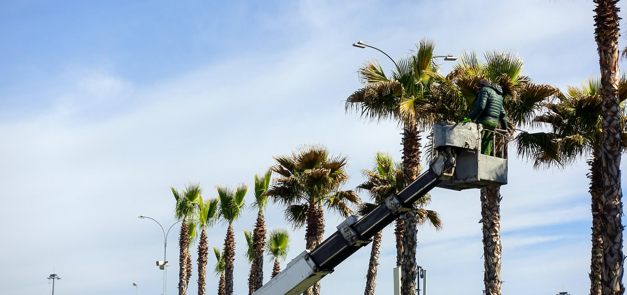 Palm Tree Trimming-Lake Worth Tree Trimming and Tree Removal Services-We Offer Tree Trimming Services, Tree Removal, Tree Pruning, Tree Cutting, Residential and Commercial Tree Trimming Services, Storm Damage, Emergency Tree Removal, Land Clearing, Tree Companies, Tree Care Service, Stump Grinding, and we're the Best Tree Trimming Company Near You Guaranteed!