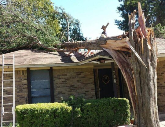 Residential Tree Services-Lake Worth Tree Trimming and Tree Removal Services-We Offer Tree Trimming Services, Tree Removal, Tree Pruning, Tree Cutting, Residential and Commercial Tree Trimming Services, Storm Damage, Emergency Tree Removal, Land Clearing, Tree Companies, Tree Care Service, Stump Grinding, and we're the Best Tree Trimming Company Near You Guaranteed!