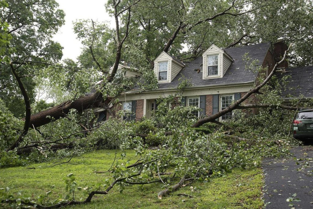 Storm Damage-Lake Worth Tree Trimming and Tree Removal Services-We Offer Tree Trimming Services, Tree Removal, Tree Pruning, Tree Cutting, Residential and Commercial Tree Trimming Services, Storm Damage, Emergency Tree Removal, Land Clearing, Tree Companies, Tree Care Service, Stump Grinding, and we're the Best Tree Trimming Company Near You Guaranteed!
