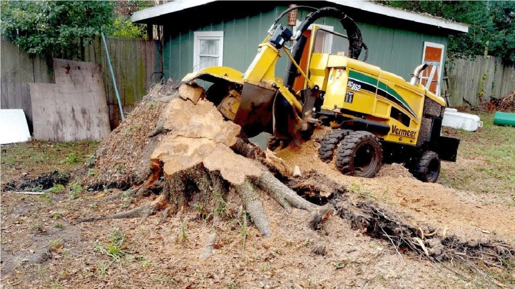 Stump Grinding-Lake Worth Tree Trimming and Tree Removal Services-We Offer Tree Trimming Services, Tree Removal, Tree Pruning, Tree Cutting, Residential and Commercial Tree Trimming Services, Storm Damage, Emergency Tree Removal, Land Clearing, Tree Companies, Tree Care Service, Stump Grinding, and we're the Best Tree Trimming Company Near You Guaranteed!