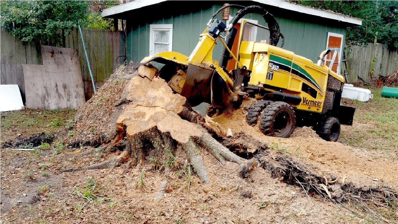 Stump Grinding and Removal-Lake Worth Tree Trimming and Tree Removal Services-We Offer Tree Trimming Services, Tree Removal, Tree Pruning, Tree Cutting, Residential and Commercial Tree Trimming Services, Storm Damage, Emergency Tree Removal, Land Clearing, Tree Companies, Tree Care Service, Stump Grinding, and we're the Best Tree Trimming Company Near You Guaranteed!