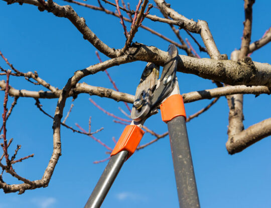 Tree Pruning & Tree Removal-Lake Worth Tree Trimming and Tree Removal Services-We Offer Tree Trimming Services, Tree Removal, Tree Pruning, Tree Cutting, Residential and Commercial Tree Trimming Services, Storm Damage, Emergency Tree Removal, Land Clearing, Tree Companies, Tree Care Service, Stump Grinding, and we're the Best Tree Trimming Company Near You Guaranteed!