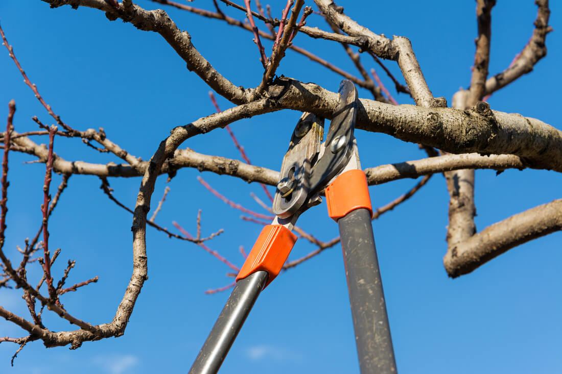Tree Pruning-Lake Worth Tree Trimming and Tree Removal Services-We Offer Tree Trimming Services, Tree Removal, Tree Pruning, Tree Cutting, Residential and Commercial Tree Trimming Services, Storm Damage, Emergency Tree Removal, Land Clearing, Tree Companies, Tree Care Service, Stump Grinding, and we're the Best Tree Trimming Company Near You Guaranteed!