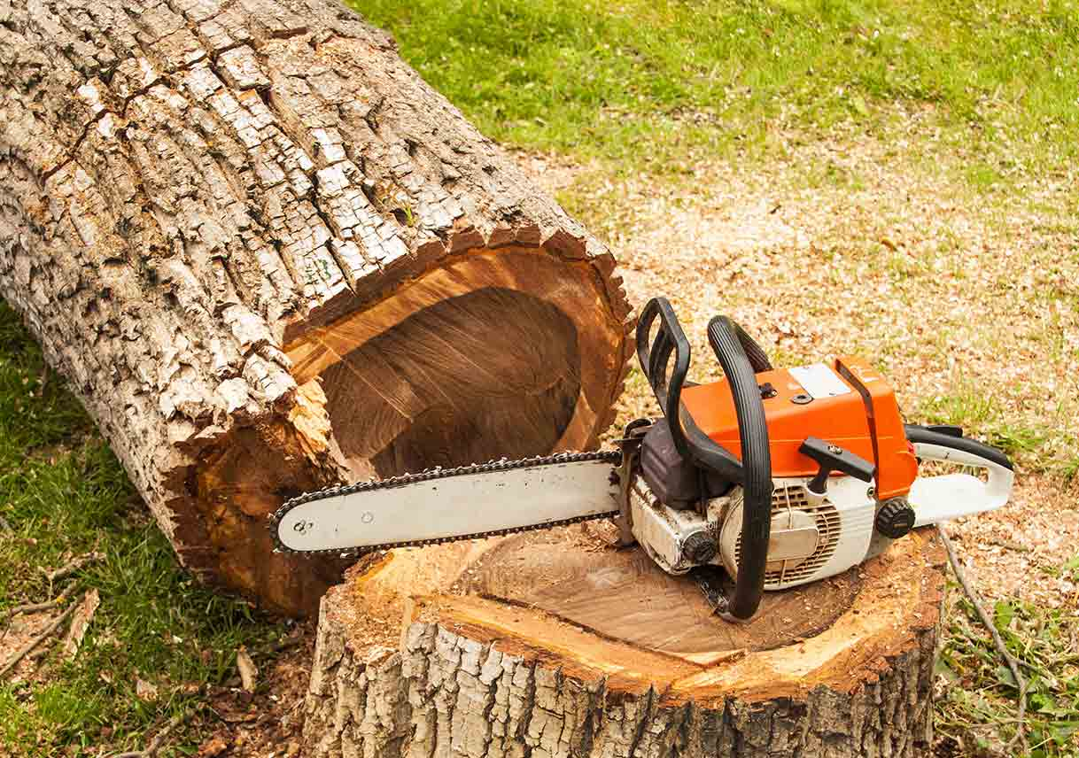 Tree Removal-Lake Worth Tree Trimming and Tree Removal Services-We Offer Tree Trimming Services, Tree Removal, Tree Pruning, Tree Cutting, Residential and Commercial Tree Trimming Services, Storm Damage, Emergency Tree Removal, Land Clearing, Tree Companies, Tree Care Service, Stump Grinding, and we're the Best Tree Trimming Company Near You Guaranteed!