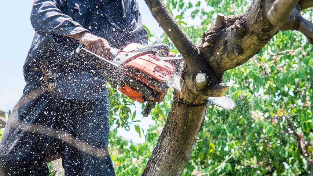 Tree Trimming-Lake Worth Tree Trimming and Tree Removal Services-We Offer Tree Trimming Services, Tree Removal, Tree Pruning, Tree Cutting, Residential and Commercial Tree Trimming Services, Storm Damage, Emergency Tree Removal, Land Clearing, Tree Companies, Tree Care Service, Stump Grinding, and we're the Best Tree Trimming Company Near You Guaranteed!