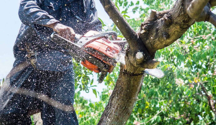 Tree Trimming Services-Lake Worth Tree Trimming and Tree Removal Services-We Offer Tree Trimming Services, Tree Removal, Tree Pruning, Tree Cutting, Residential and Commercial Tree Trimming Services, Storm Damage, Emergency Tree Removal, Land Clearing, Tree Companies, Tree Care Service, Stump Grinding, and we're the Best Tree Trimming Company Near You Guaranteed!
